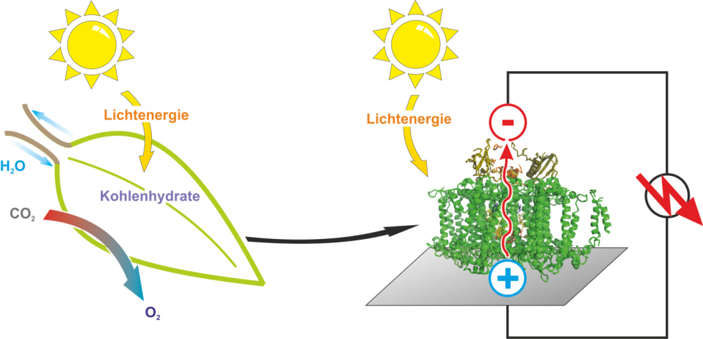 photosynthetic-proteins